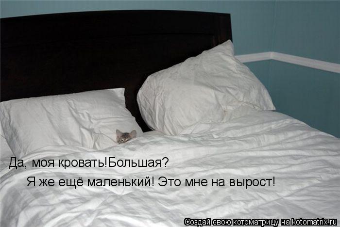Котоматрица: Да, моя кровать!Большая?  Я же ещё маленький! Это мне на вырост!