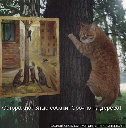 Котоматрица: Осторожно! Злые собаки! Срочно на дерево!