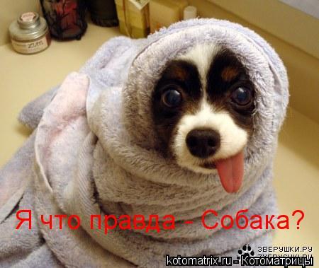 Котоматрица: Я что правда - Собака?