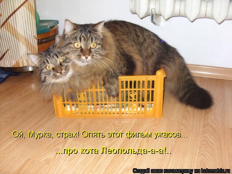 Котоматрица: Ой, Мурка, страх! Опять этот фильм ужасов...  ...про кота Леопольда-а-а!..