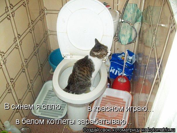 Котоматрица: В синем я сплю, в красном играю... в белом котлеты зарабатываю...