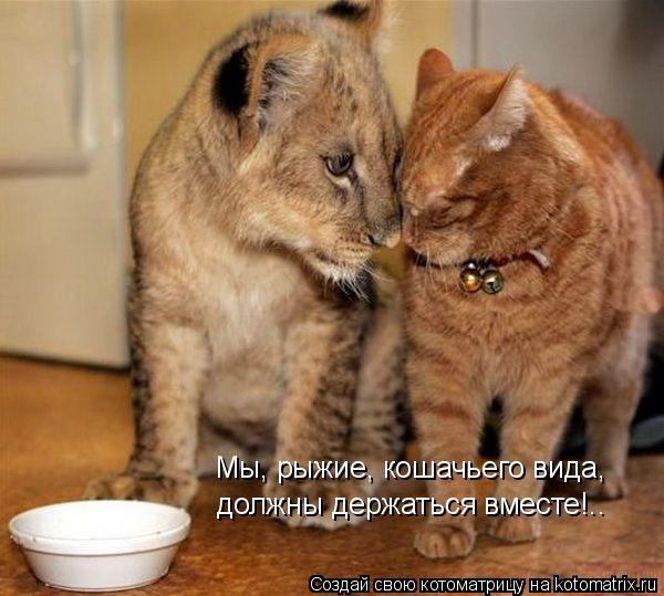 Котоматрица: Мы, рыжие, кошачьего вида,  должны держаться вместе!..