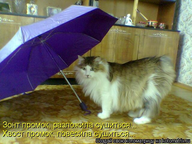 Котоматрица: Зонт промок, разложила сушиться... Хвост промок, повесила сушиться...