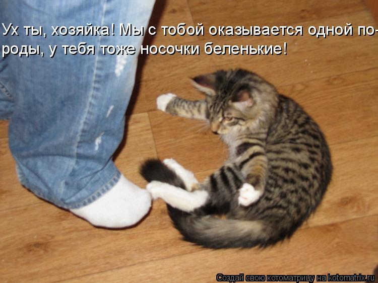 Котоматрица: Ух ты, хозяйка! Мы с тобой оказывается одной по- роды, у тебя тоже носочки беленькие!