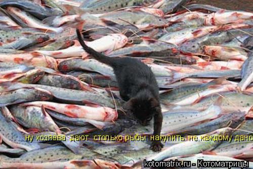 Котоматрица: ну хозяева  дают  столько рыбы  накупить  не каждому дано