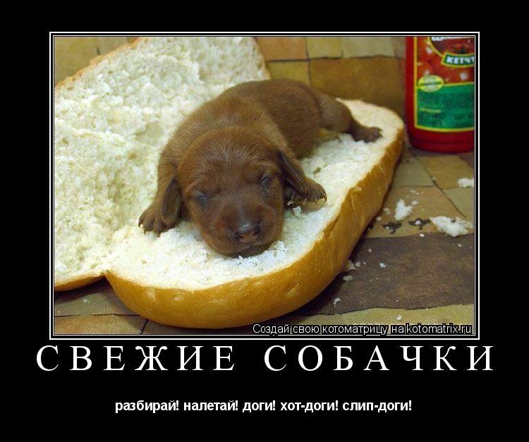 Котоматрица: свежие собачки разбирай! налетай! доги! хот-доги! слип-доги!