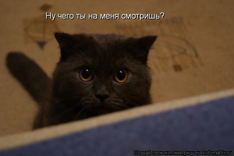 Котоматрица: Ну чего ты на меня смотришь?