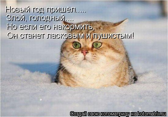 Котоматрица: Новый год пришёл..... Злой, голодный.... Но если его накормить, Он станет ласковым и пушистым!