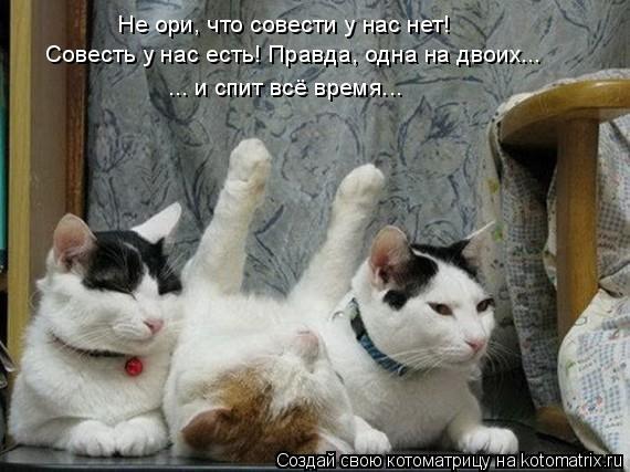 Котоматрица: Не ори, что совести у нас нет!  Совесть у нас есть! Правда, одна на двоих... ... и спит всё время...