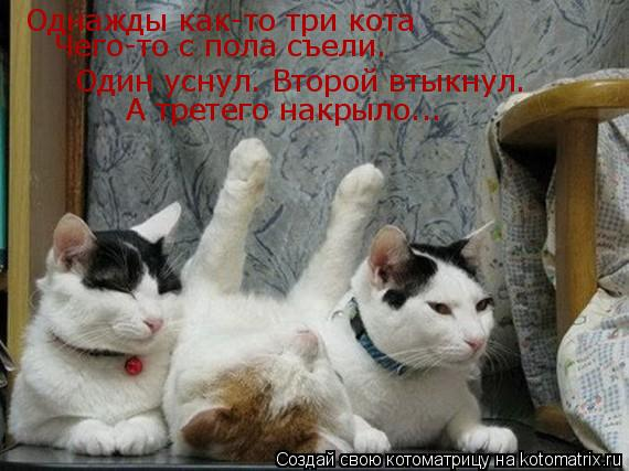 Котоматрица: Однажды как-то три кота Один уснул. Второй втыкнул. А третего накрыло... Чего-то с пола съели.
