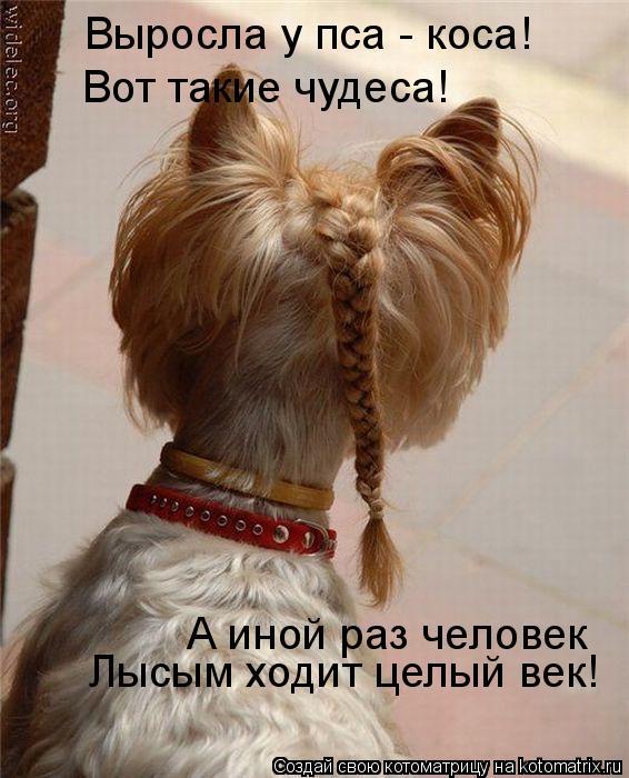 Котоматрица: Выросла у пса - коса! Вот такие чудеса! А иной раз человек Лысым ходит целый век!