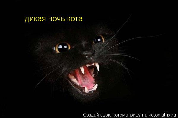 Котоматрица: дикая ночь кота