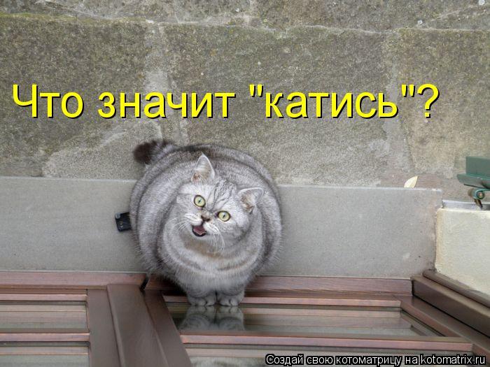 "Котоматрица: Что значит ""катись""?"