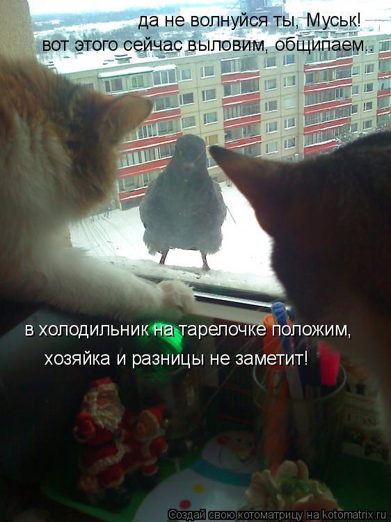 Котоматрица: да не волнуйся ты, Муськ! вот этого сейчас выловим, общипаем.. в холодильник на тарелочке положим, хозяйка и разницы не заметит!