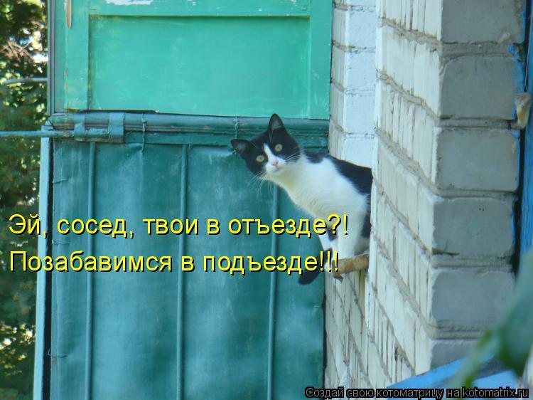 Котоматрица: Эй, сосед, твои в отъезде?! Позабавимся в подъезде!!!