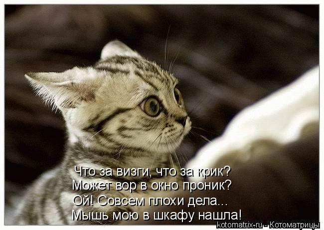 Котоматрица: Что за визги, что за крик? Может вор в окно проник? Мышь мою в шкафу нашла! Ой! Совсем плохи дела...