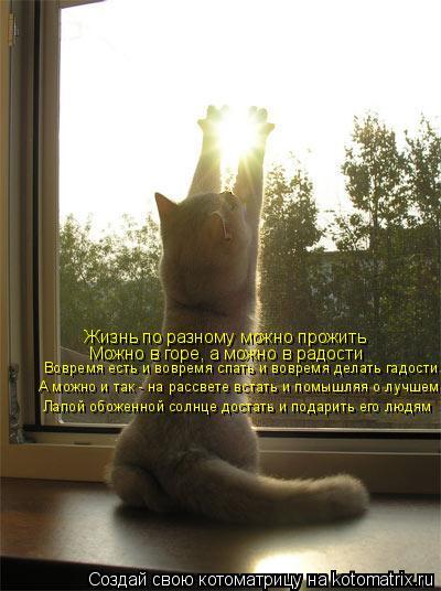 Котоматрица: Жизнь по разному можно прожить Можно в горе, а можно в радости Лапой обоженной солнце достать и подарить его людям А можно и так - на рассвет