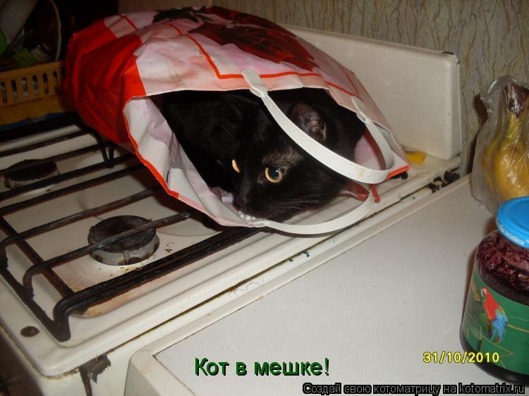 Котоматрица: Кот в мешке!
