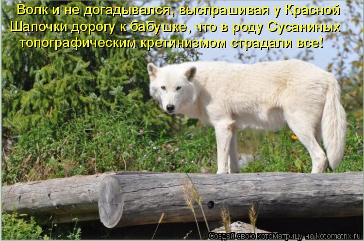 Котоматрица: Волк и не догадывался, выспрашивая у Красной  Шапочки дорогу к бабушке, что в роду Сусаниных  топографическим кретинизмом страдали все!
