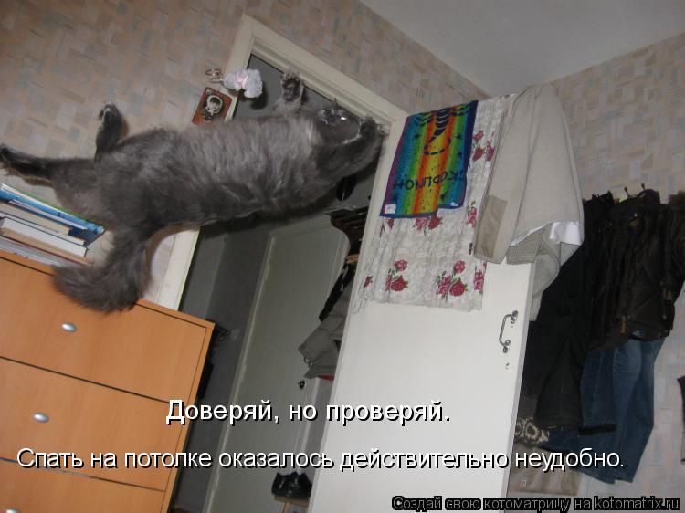 Котоматрица: Доверяй, но проверяй. Спать на потолке оказалось действительно неудобно.
