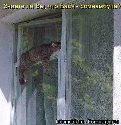 Котоматрица: Знаете ли Вы, что Вася - сомнамбула?