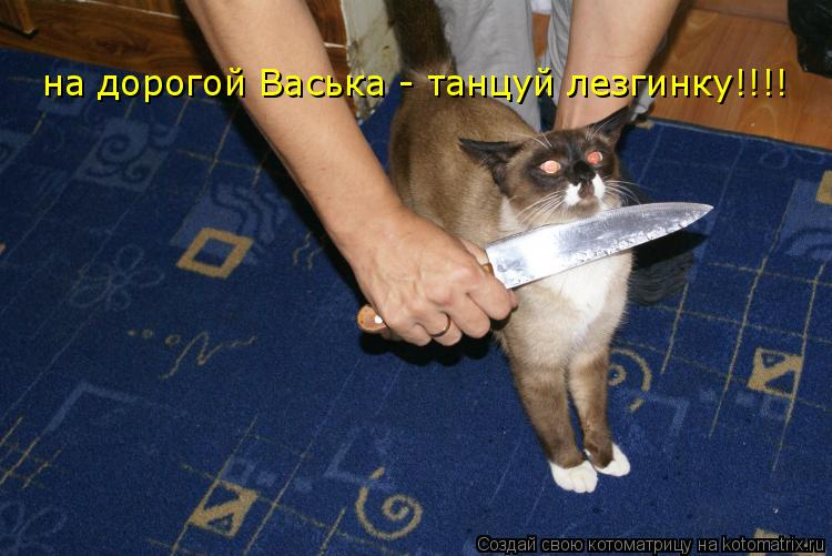 Котоматрица: на дорогой Васька - танцуй лезгинку!!!!