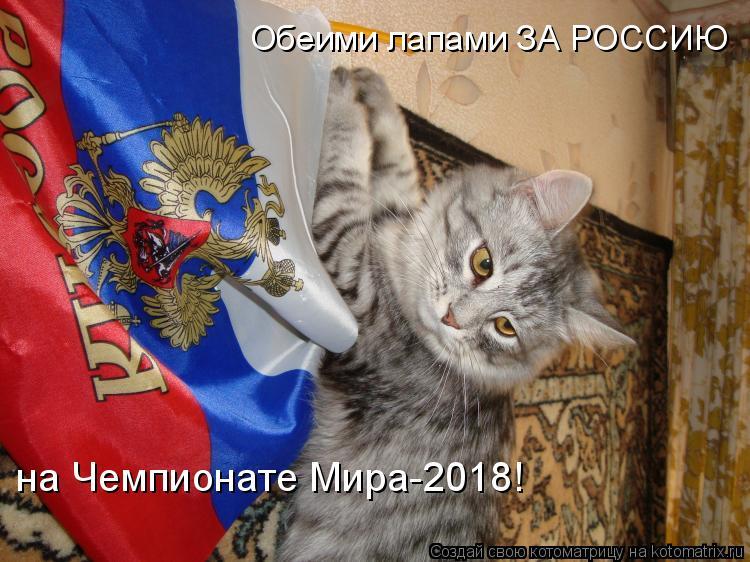 Котоматрица: Обеими лапами ЗА РОССИЮ  на Чемпионате Мира-2018!