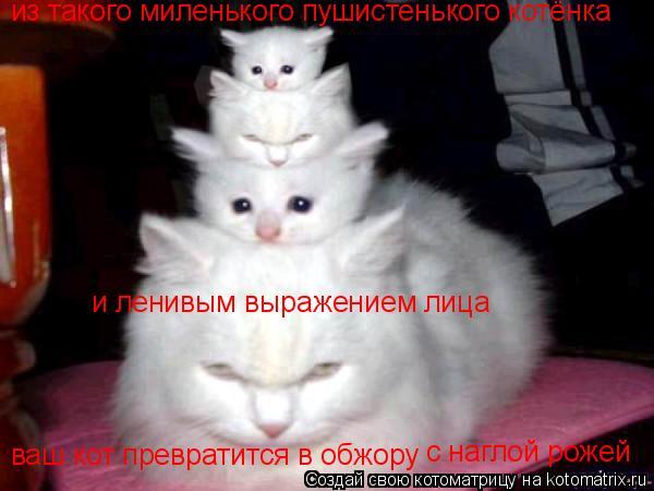 Котоматрица: из такого миленького пушистенького котёнка ваш кот превратится в обжору  с наглой рожей и ленивым выражением лица