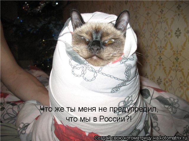 Котоматрица: Что же ты меня не предyпредил,  что мы в России?!