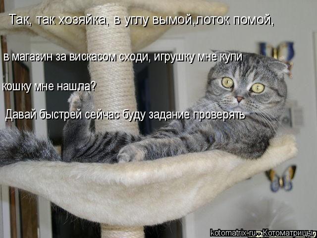 Котоматрица: Так, так хозяйка, в углу вымой,лоток помой, в магазин за вискасом сходи, игрушку мне купи кошку мне нашла? Давай быстрей сейчас буду задание п