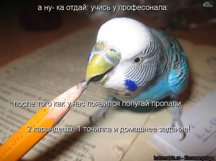 Котоматрица: а ну- ка отдай: учись у професонала: после того как у нас появился попугай пропали: 2 карандеша, 1 точилка и домашнее задание!