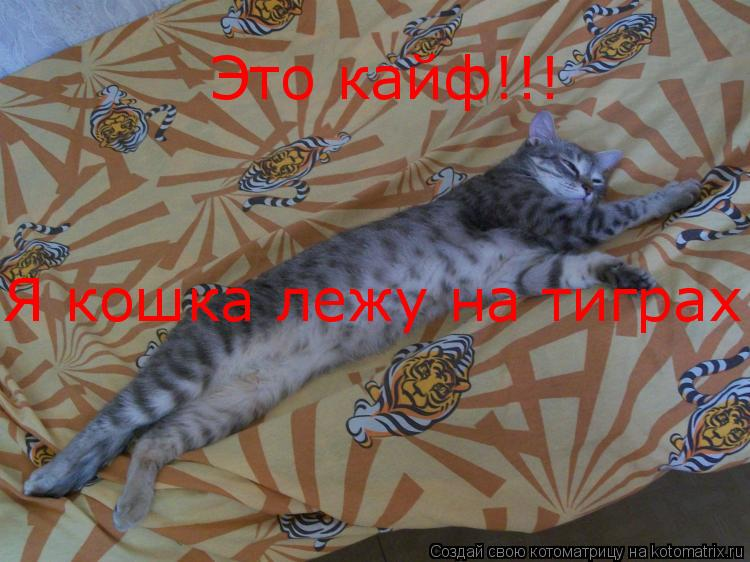 Котоматрица: Это кайф!!! Я кошка лежу на тиграх