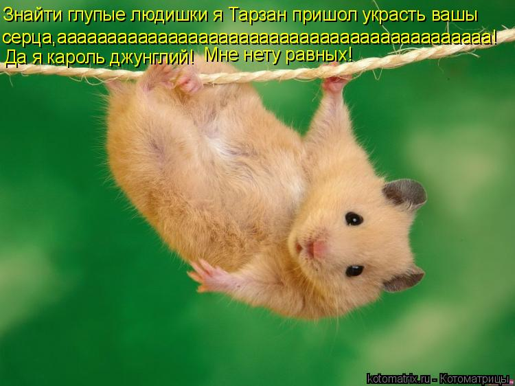 Котоматрица: Знайти глупые людишки я Тарзан пришол украсть вашы серца,ааааааааааааааааааааааааааааааааааааааааааа! Да я кароль джунглий! серца,аааааа
