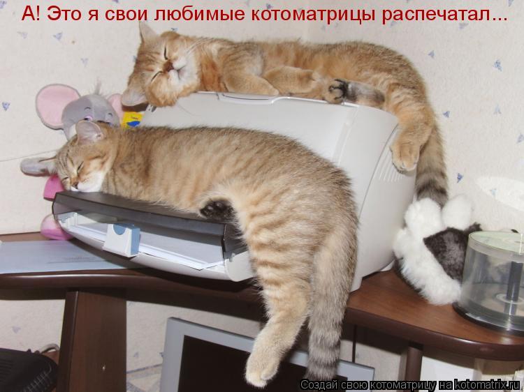 Котоматрица: А! Это я свои любимые котоматрицы распечатал...