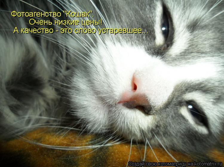 """Котоматрица: Фотоагенство """"Кошак"""". Очень низкие цены! А качество - это слово устаревшее..."""