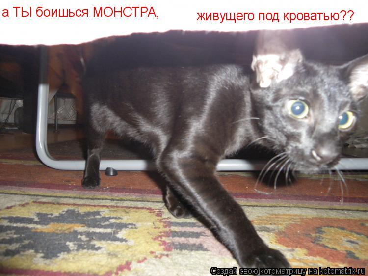 Котоматрица: живущего под кроватью?? а ТЫ боишься МОНСТРА,