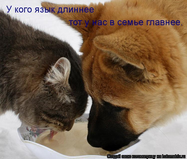 Котоматрица: У кого язык длиннее  тот у нас в семье главнее.