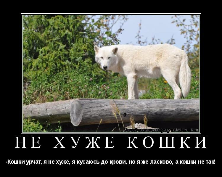 Котоматрица: Не хуже кошки -Кошки урчат, я не хуже, я кусаюсь до крови, но я же ласково, а кошки не так!