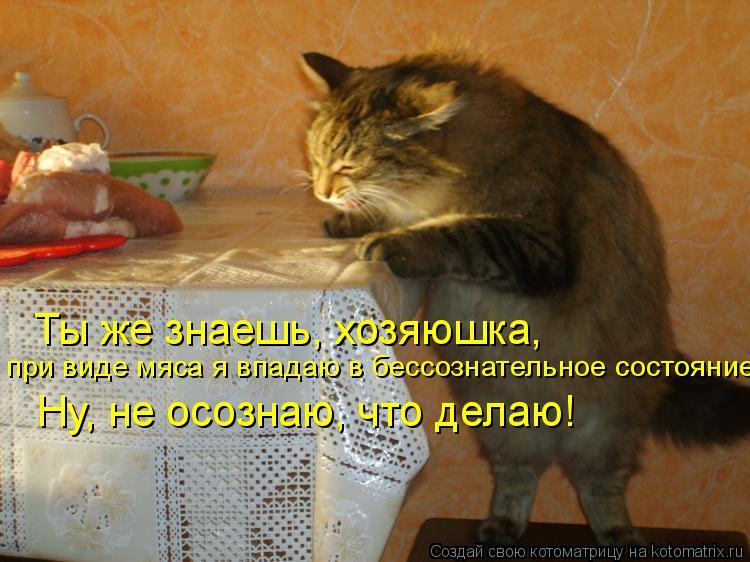 Котоматрица: Ты же знаешь, хозяюшка, при виде мяса я впадаю в бессознательное состояние! Ну, не осознаю, что делаю!
