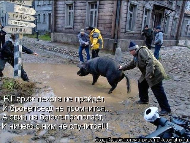 Котоматрица: В Париж пехота не пройдёт,  И бронепоезд не промчится... А свин на брюхе проползёт, И ничего с ним не случится!!!