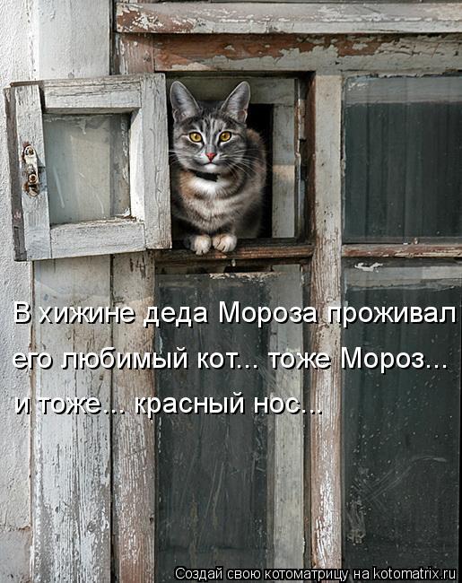 Котоматрица: его любимый кот... тоже Мороз... и тоже... красный нос... В хижине деда Мороза проживал