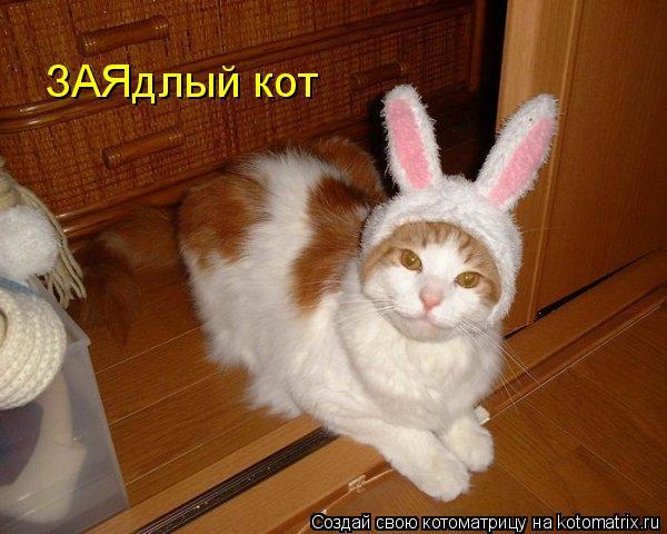 Котоматрица: ЗАЯдлый кот