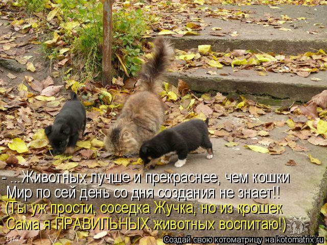 Котоматрица: - ...Животных лучше и прекраснее, чем кошки Мир по сей день со дня создания не знает!! (Ты уж прости, соседка Жучка, но из крошек Сама я ПРАВИЛЬН