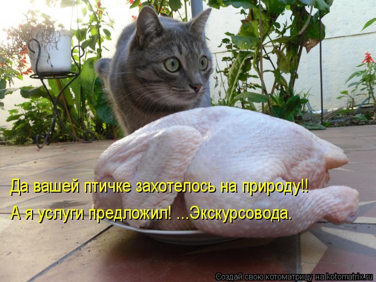 Котоматрица: Да вашей птичке захотелось на природу!! А я услуги предложил! ...Экскурсовода.
