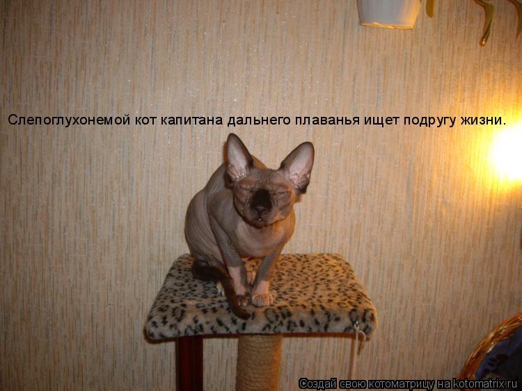 Котоматрица: Слепоглухонемой кот капитана дальнего плаванья ищет подругу жизни.