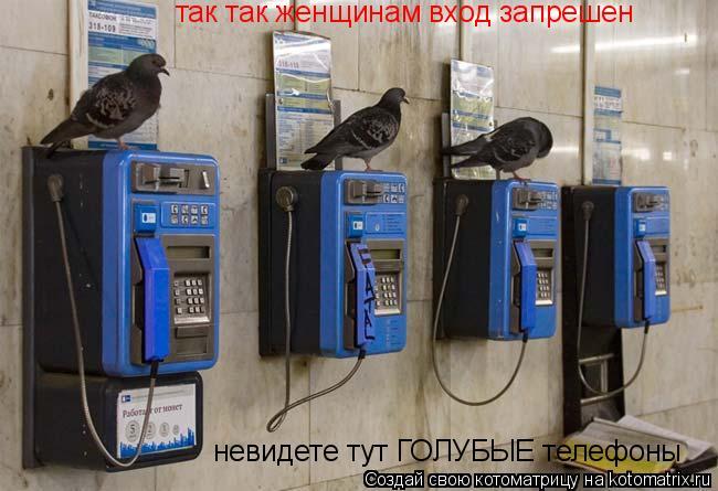 Котоматрица: так так женщинам вход запрешен  невидете тут ГОЛУБЫЕ телефоны