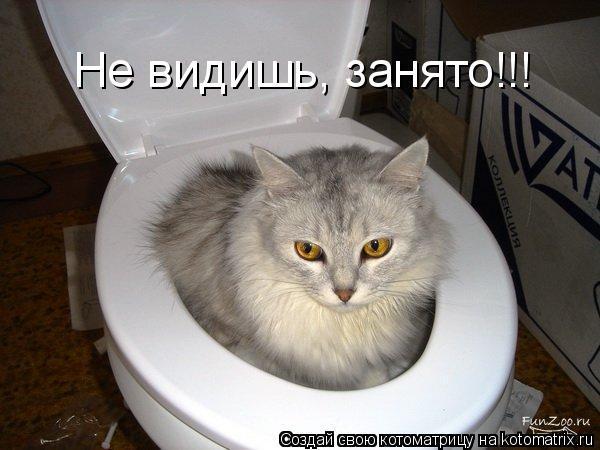 Котоматрица: Не видишь, занято!!!