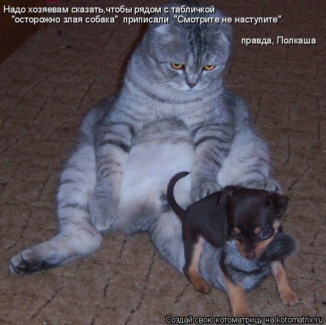 """Котоматрица: Надо хозяевам сказать,чтобы рядом с табличкой """"осторожно злая собака""""  приписали  """"Смотрите не наступите"""" правда, Полкаша"""
