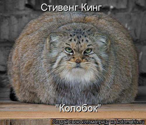 "Котоматрица: Стивенг Кинг ""Колобок"""