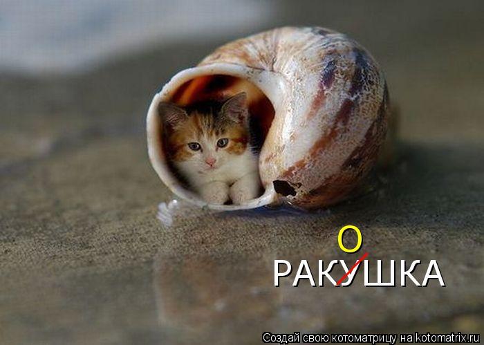 Котоматрица: РАКУШКА __ О